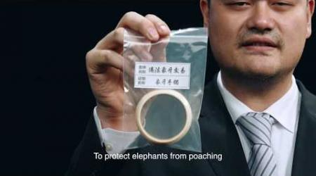 Embedded thumbnail for Yao Ming - China Ivory Ban