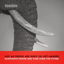 #JoinTheHerd - Instagram