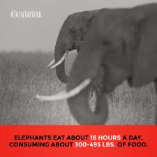 #JoinTheHerd - Instagram (Eat)