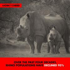 #JoinTheHerd - Rhino (Four Decades)