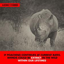 #JoinTheHerd - Rhino (Lifetimes)
