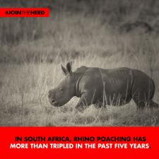 #JoinTheHerd - Rhino (Tripled)